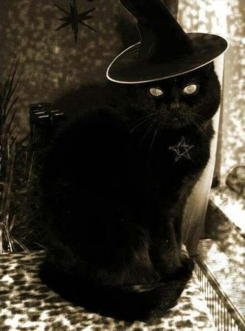 Witch's Cat (Image via Madame LaVeys House of Tarot)