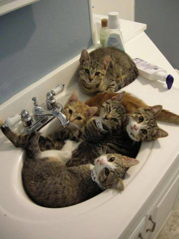 Overcrowded Sink Cats