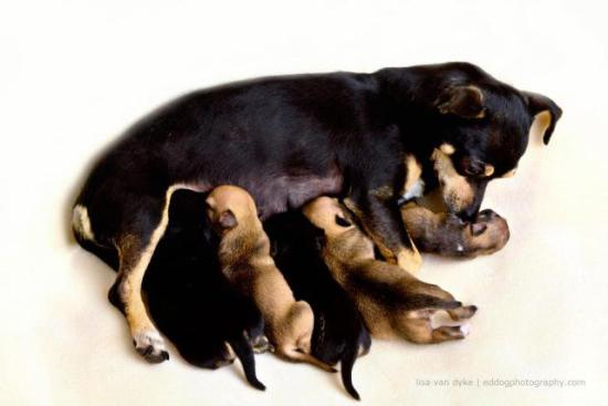 Casey and her five pups, including Beyoncé: image via facebook.com
