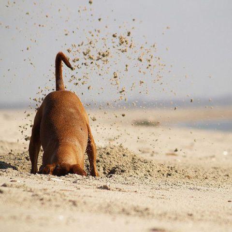 Digging Dog (Image via Etsy)