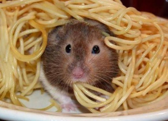 Pasta Hamster (Image via Dale's Designs)