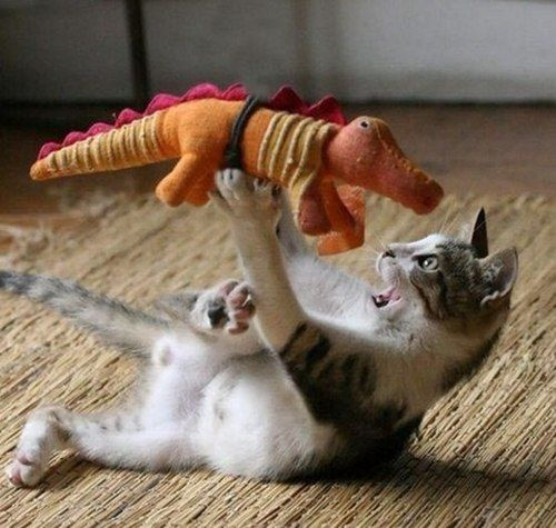 Cat Fight (Image via Petit Cabinet de Curiosities )