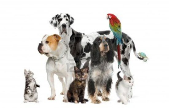 Pets. The AVMA released data on where they all live: image via 123rf.com
