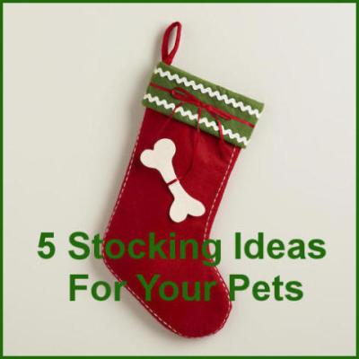 Christmas Stocking Ideas.Pet Christmas Stockings 5 Stocking Ideas For Your Pet