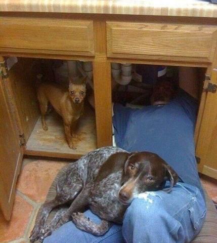 Helpful Dogs