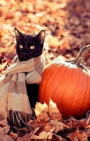 Autumn Cat (Image via tervezzvelem)