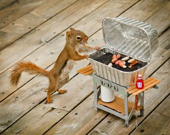 Squirrel Barbecue