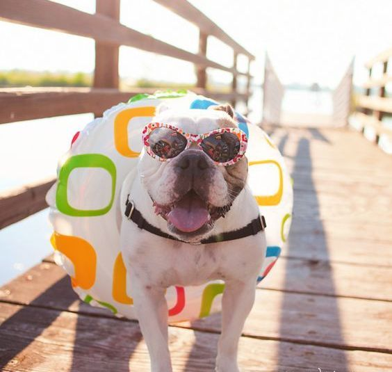 Summertime Dog