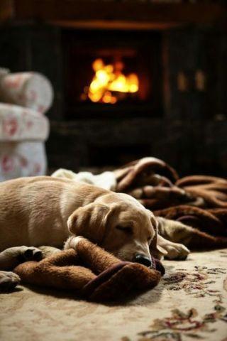 Fireside Puppy