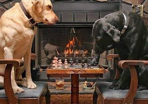 Chess-Playing Dogs