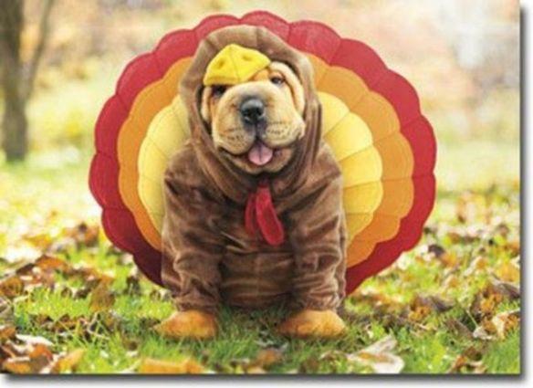 Turkey Dog