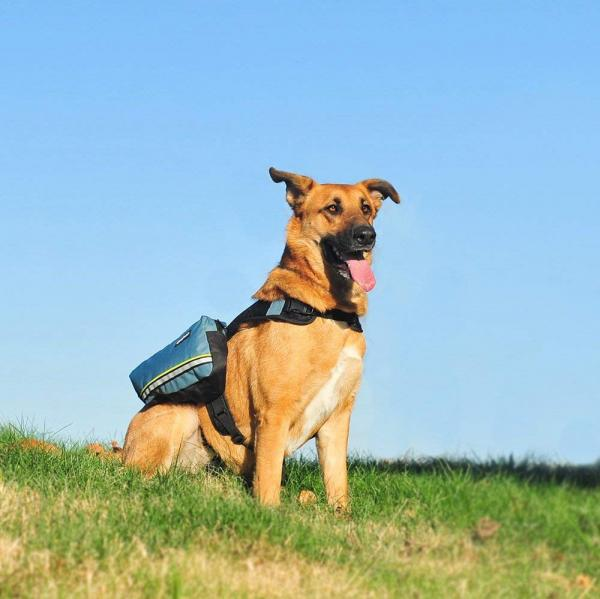 Zippy Paws Adventure Backpack For Dogs