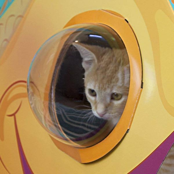 Kitty City Bubble Window Cat Cubby, Fish Dome