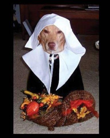 Pilgrim Retriever