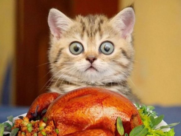 Thankful Kitten