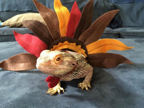 Thanksgiving Lizard