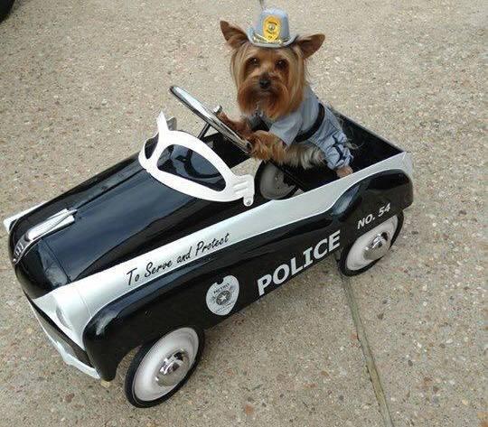Fierce Police Dog
