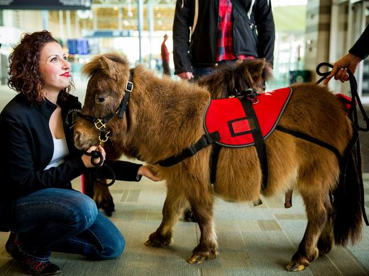 Miniature horses provide therapy at the CNKIA