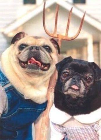American Gothic Pugs (Image via For the Love of Pugs)