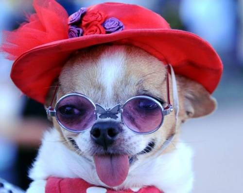 Red Hat Dog (Image via Dogster)