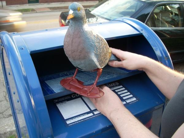 Pigeon Post from Letter Writers Alliance