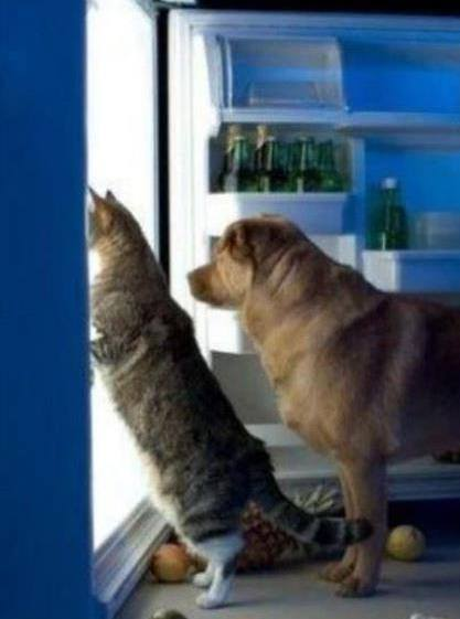 Dog and cat in refrigerator