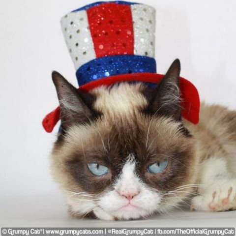 Grumpy Independence Day Cat