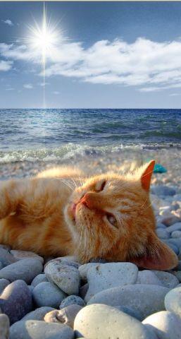 Blissful Beach Cat