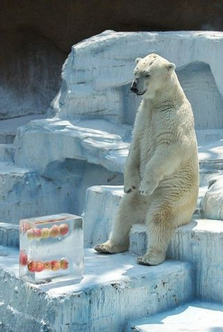 Ice Pop Polar Bear