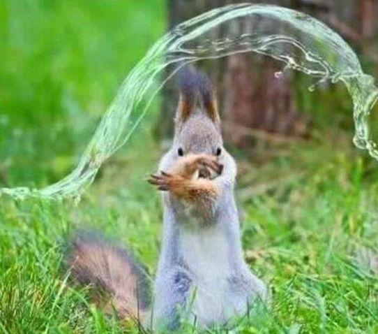 Water-Bending Squirrel