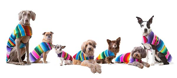 Handmade Dog Ponchos From Mexican Serape Blankets