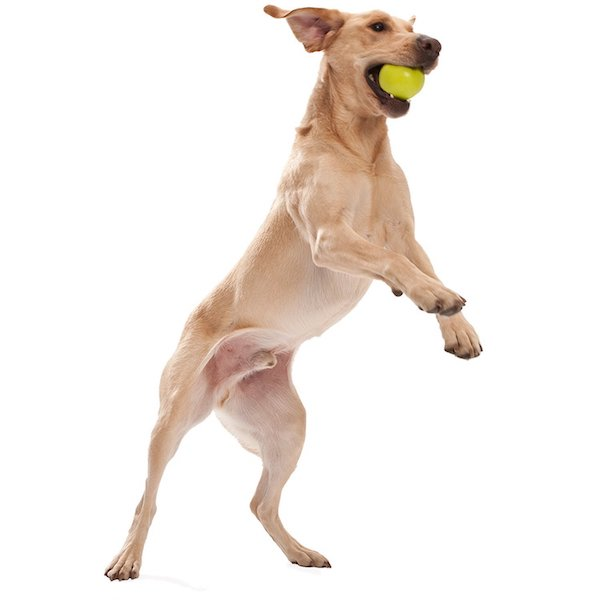 West Paw Zogoflex Jive Durable Ball Chew Toy