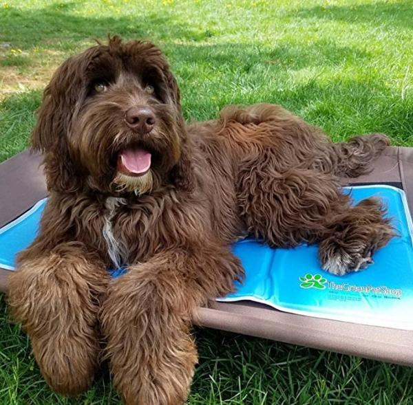 The Green Pet Shop Cooling Pet Mat/Pad Patented Pressure-Activated Cool Gel