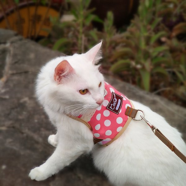 Yizhi Miaow Adjustbale Kitten/Ferret Walking Jackets