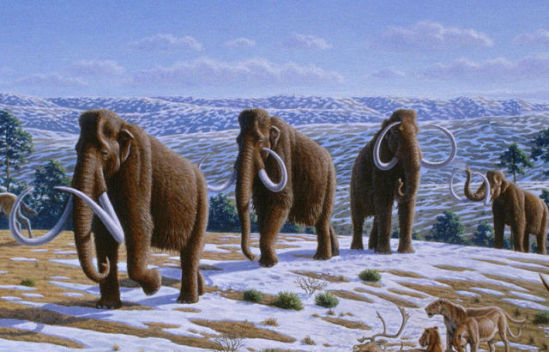 Restoratiion of wooly mammoths during Pleistocene age in northern Spain: image via wikipedia.org