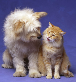 Dog and cat health insurance could be offered as an employee benefit: image via petuniversity.com