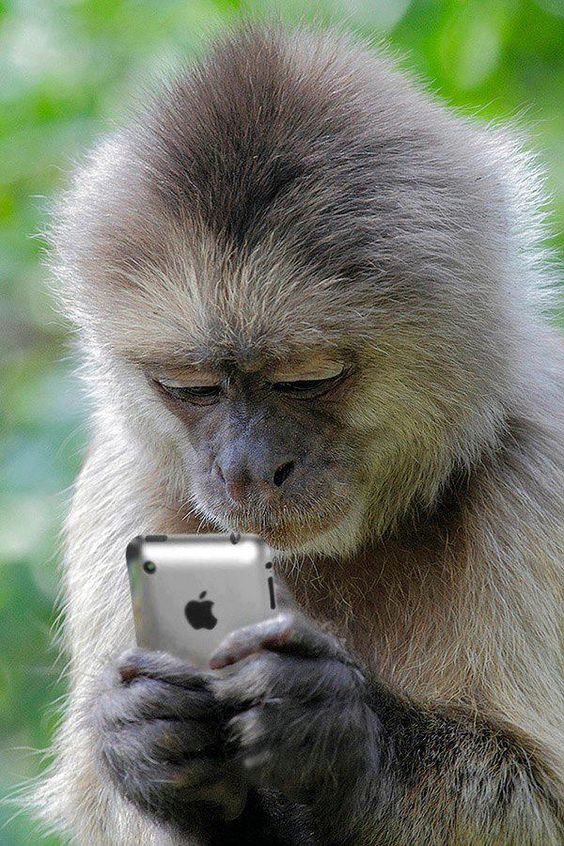 Cell Phone Monkey