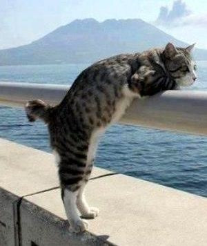 Seaside Cat