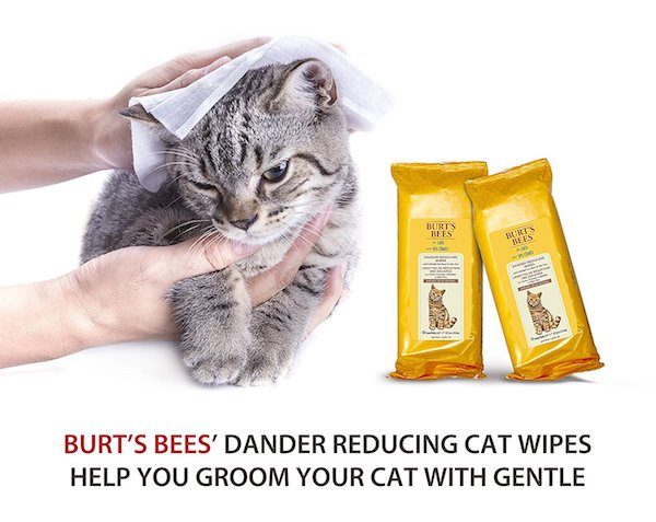 https://www.amazon.com/Burts-Bees-Dander-Reducing-Grooming/dp/B01CCV8GUA/ref=sr_1_8?ie=UTF8&qid=1528655721&sr=8-8&keywords=dry+shampoo+for+cats