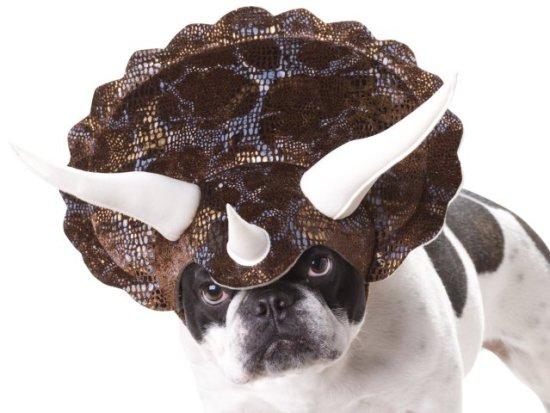 Triceratop Dinasaur Dog Costume