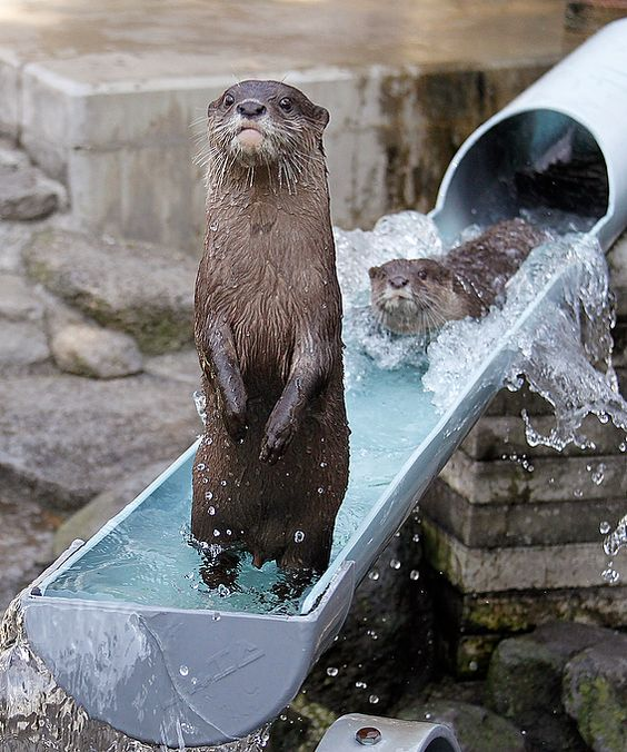 Otter Water Slide
