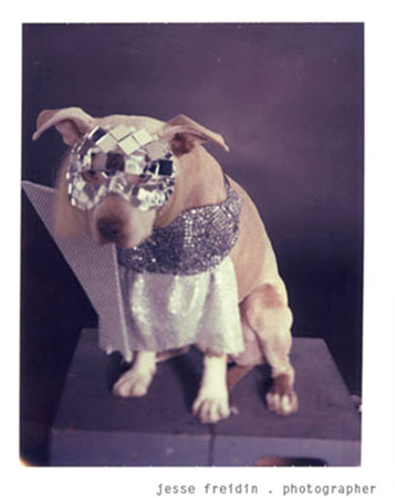 Best Female Impersonator: Doggie Gaga