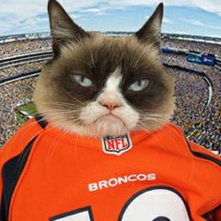 Grumpy Cat is a Broncos Fan