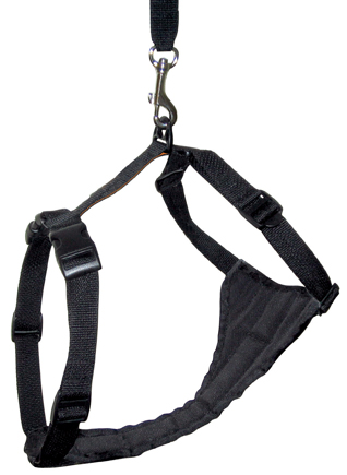 Kurgo Tru-Fit Harness and Tether attach to the Zip Line: © Kurgo Products
