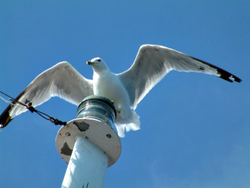 Albatross Alighting: 19 out of 21 species of albatross are considered threatened
