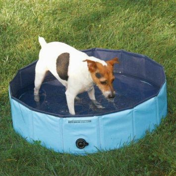 Doggy swimming pool