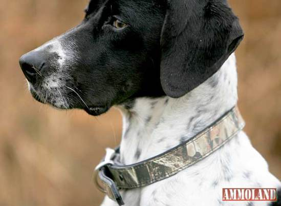 Lost Camo leather dog collar: image via ammoland.com