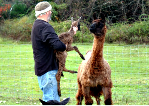 Animal Friendly with a Twist, the Starlight Llama B&B: Photo courtesy of Jarred Clapp