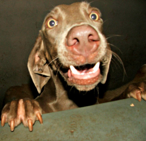 Training Your Dog Not to Jump Up: Jumping on people can lead to jumping on counters & tables