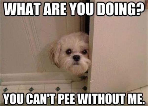 Dog opening bathroom door